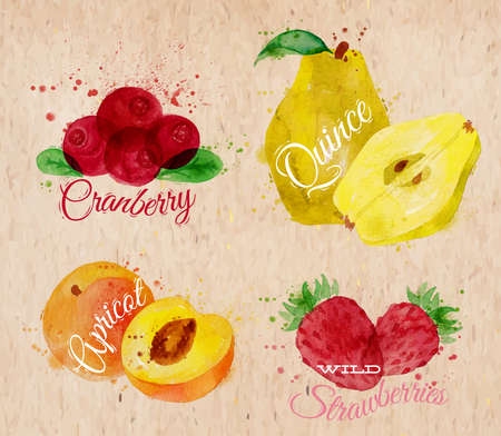 quince: Fruit set drawn watercolor blots and stains with a spray cranberry, quince, apricot, wild strawberries in kraft