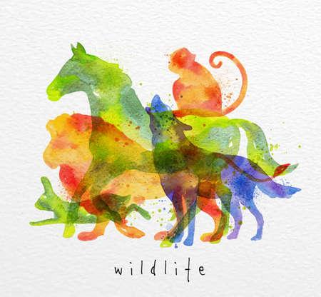 Barevné zvířata, koně, vlk, opice, lev, králík, kreslení přetisk na akvarel papíru pozadí nápisy volně žijících živočichů