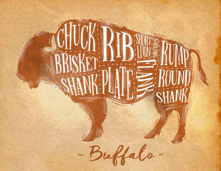 Poster buffalo cutting scheme lettering chuck, brisket, shank, rib, plate, flank, sirloin, shortloin, rump, round, shank in retro style drawing craft background Illustration