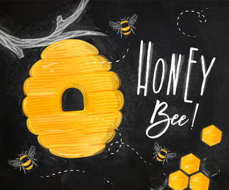 Poster illustrated bee hive, honeycombs lettering honey bee drawing on chalk background