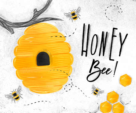 Poster illustrated bee hive, honeycombs lettering honey bee drawing on dirty paper background