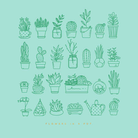Flat icon set  of plants in pots drawing on  turquoise background.