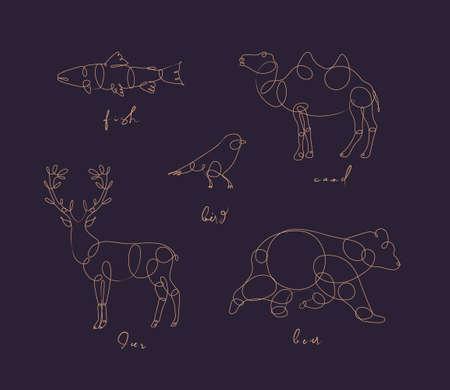 Set van dieren vis, kameel, vogel, herten beer tekening in pen lijnstijl op donkere achtergrond Vector Illustratie