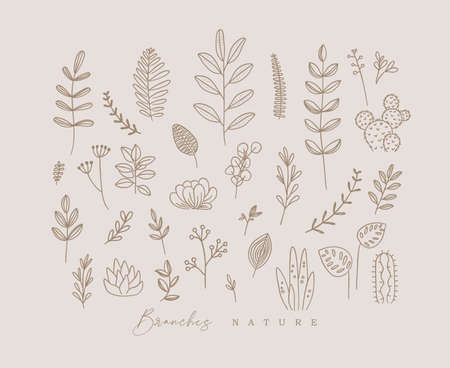 Set of different forms branch and leaves in minimalism style drawing on beige background Иллюстрация