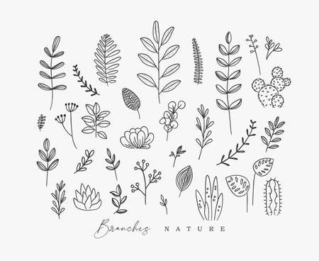 Set of different forms branch and leaves in minimalism style drawing on white background