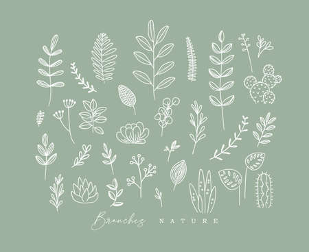 Set of different forms branch and leaves in minimalism style drawing on green background