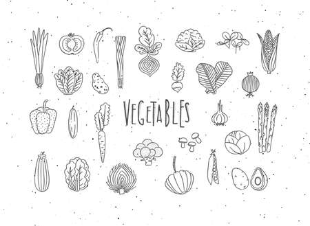 Set of vegetable icons onion, tomato, lettuce, chili, pepper, beets, radish, corn, leek, cucumber, carrot, garlic, asparagus, mushrooms, eggplant, lettuce artichoke broccoli pumpkin peas avocado drawing in handmade line style on white background
