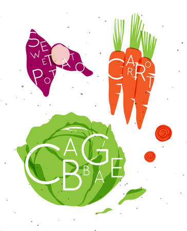 Set of color vegetables with inscription sweet potato, carrot, cabbage drawing in minimalist style