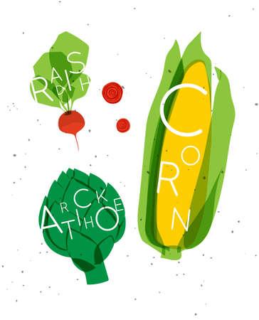 Set of color vegetables with inscription radish, artichoke, corn drawing in minimalist style 矢量图像
