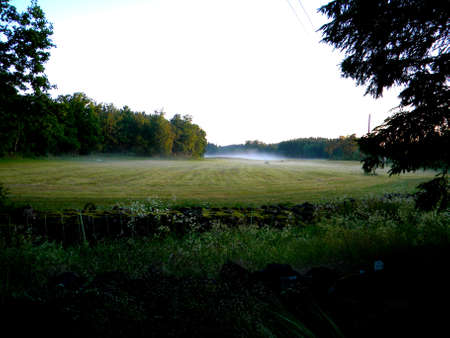 mist on the meadow