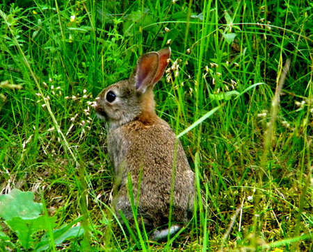 a small hare sneaks up