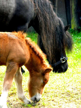 a small foal together with his mother