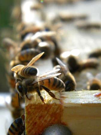 beekeping Stock Photo
