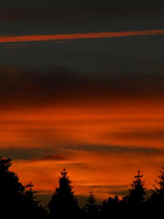 un beau coucher de soleil sur la for�t Banque d'images