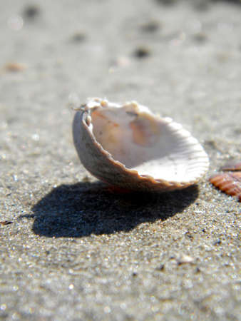 a lonly shell in the sand