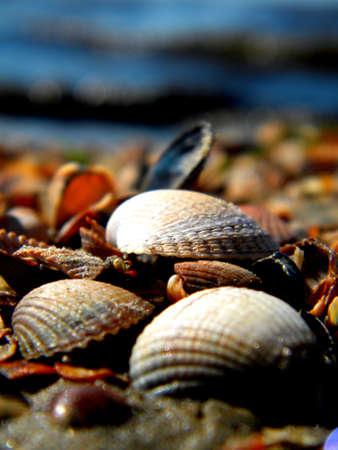 coquillages sur une plage ensoleill�e Banque d'images