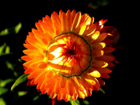 amazing flower in the sunlight