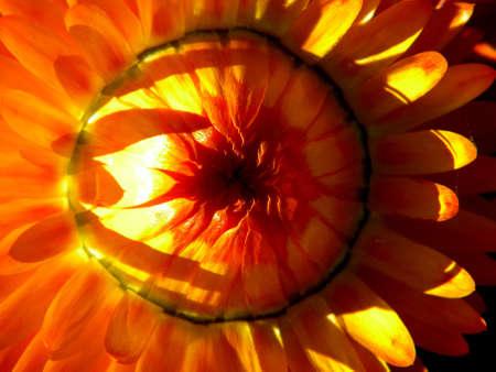 fleur dans le soleil d'�t�