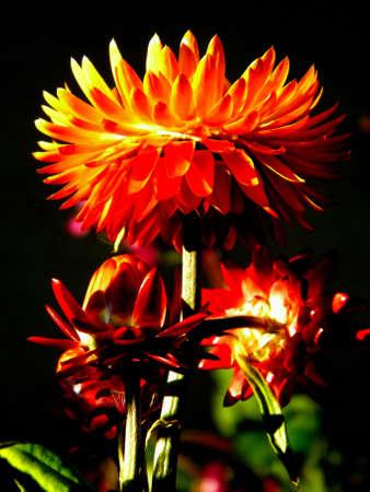 belles fleurs dans la lumi�re du soleil