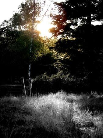 coucher de soleil sur la prairie