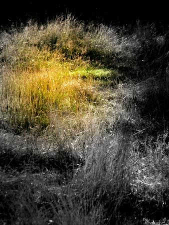 la lumi�re du soleil sur la prairie Banque d'images