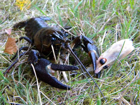 a crab holding a shrimp