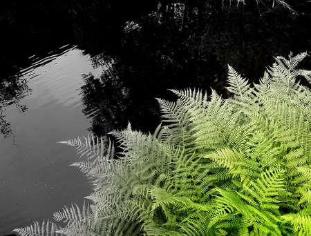 l'essor d'une foug�re au bord du ruisseau