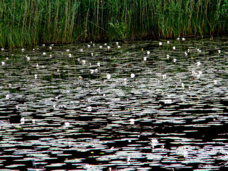a pond full of waterplants Stock Photo - 14798326