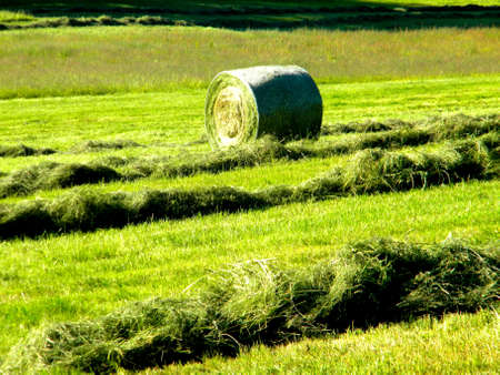 harvest time on the field, a pressed bale and loose hay
