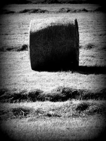 hay crop on the farm