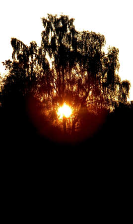 the sun goes down under a tree
