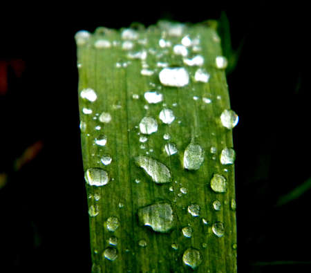 dropplets after a rain on a plant Stock Photo