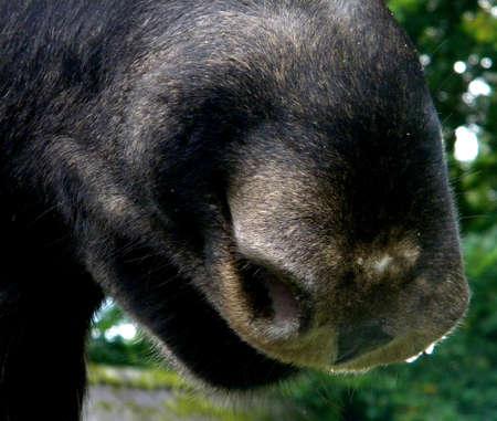 a moose nose