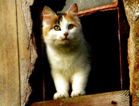 un chat dans une vieille fen�tre