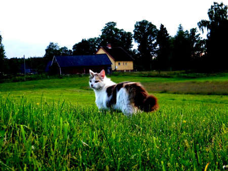 un chat part � l'aventure