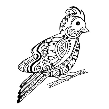 beautiful bird in the style of a sketch