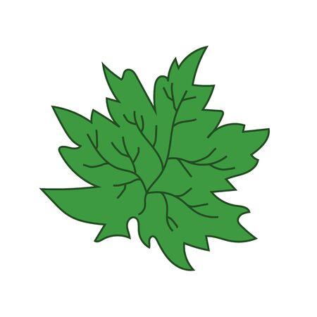 Tree green leaf. Maple. Summer. Vector illustration Illustration