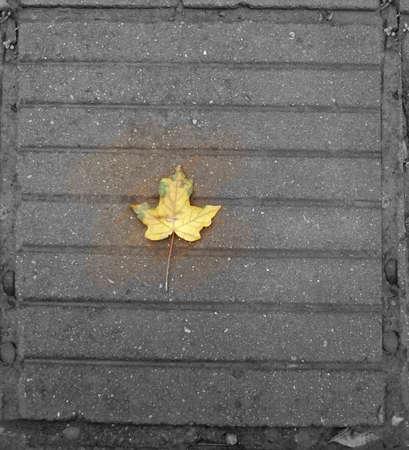 Autumn maple leaf on gray pavement. photo