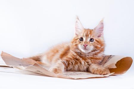Beautiful kittens on a white background, playing, sitting, portrait photo