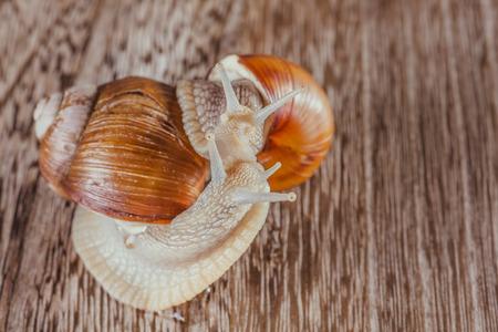 molluscs: mollusks grass slime, the grape snail Bright shell creeps