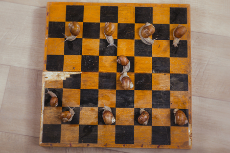 Snails play chess. Slowness of large snails, party photo