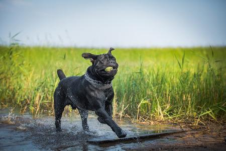 dog runs on water photo