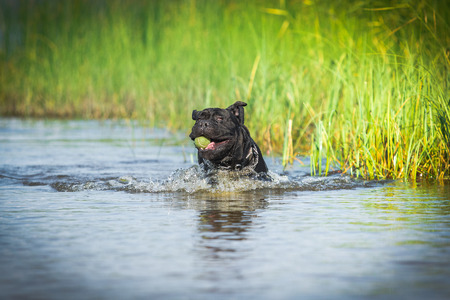 dog runs floats moving in the open air photo
