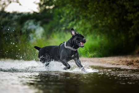 dog runs on water photo