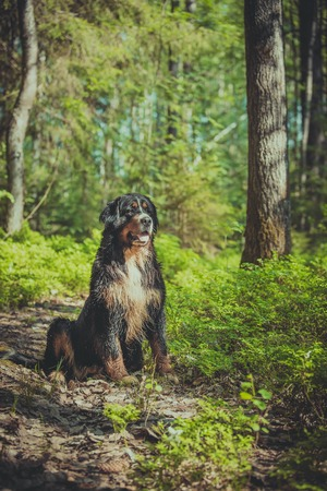 dog in the woods in nature blueberry greens photo