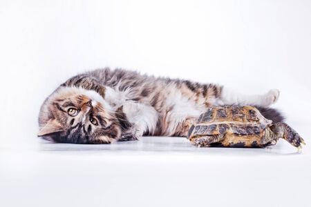 Cute tabby kitten more fluffy good cat photo