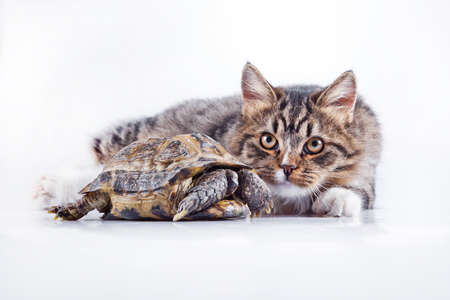 ferret: Cute tabby kitten more fluffy good cat