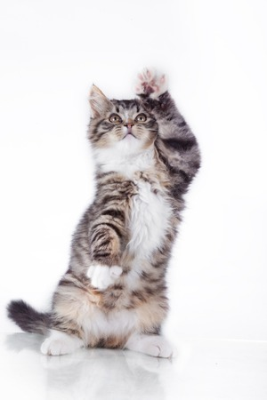 Leuk tabby kitten meer pluizige goede kat