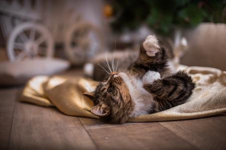 tabby kat spelen op een gekleurde achtergrond met toebehoren