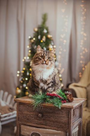 Tabby kat speelt bij de kerstboom, kerstvakantie